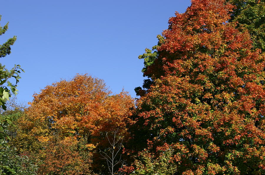 Fall Foliage In The Arboretum Photograph