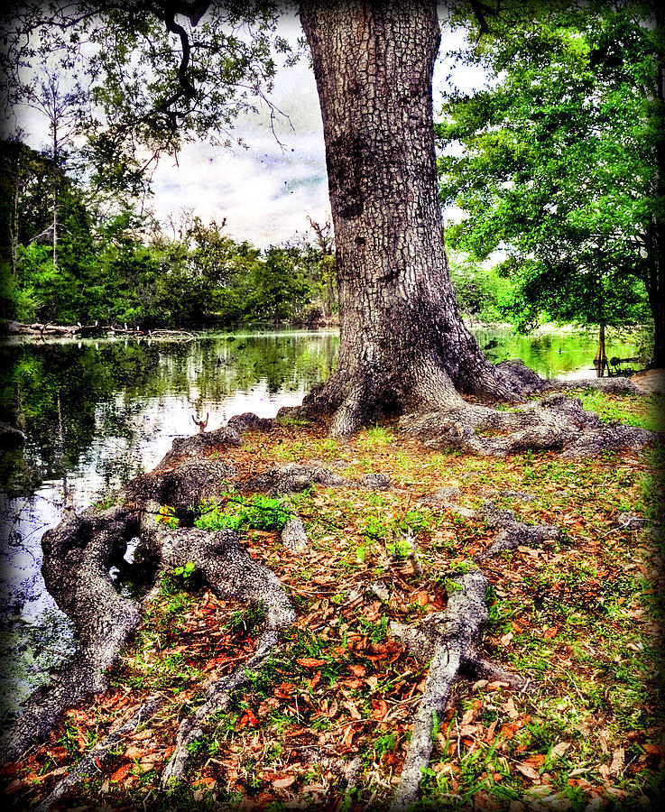 Fall In Audubon Park Photograph