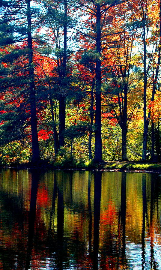 Fall In Reflection Photograph  - Fall In Reflection Fine Art Print
