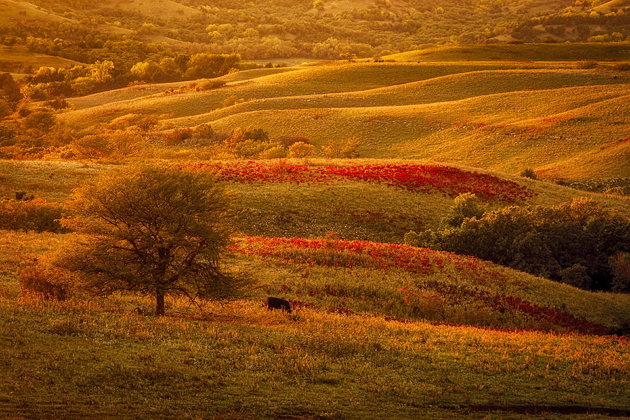 Fall In The Flint Hills Photograph