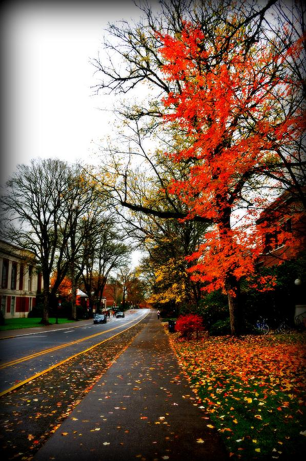 Fall In The Northwest Photograph