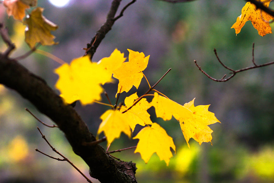 Fall Leaves Photograph - Fall Leaves by Allan Millora