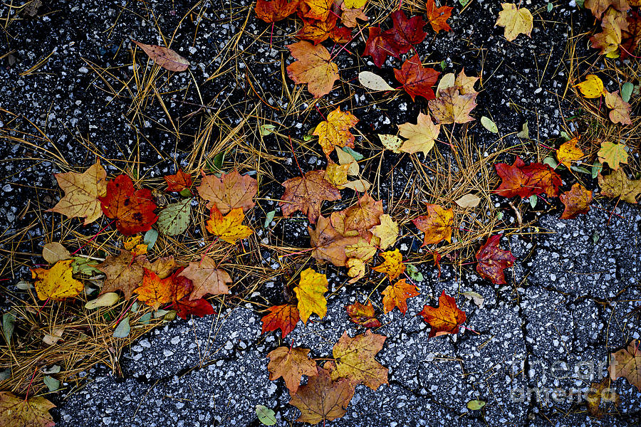 Fall Leaves On Pavement Photograph