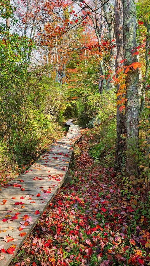 Fall Morning Photograph