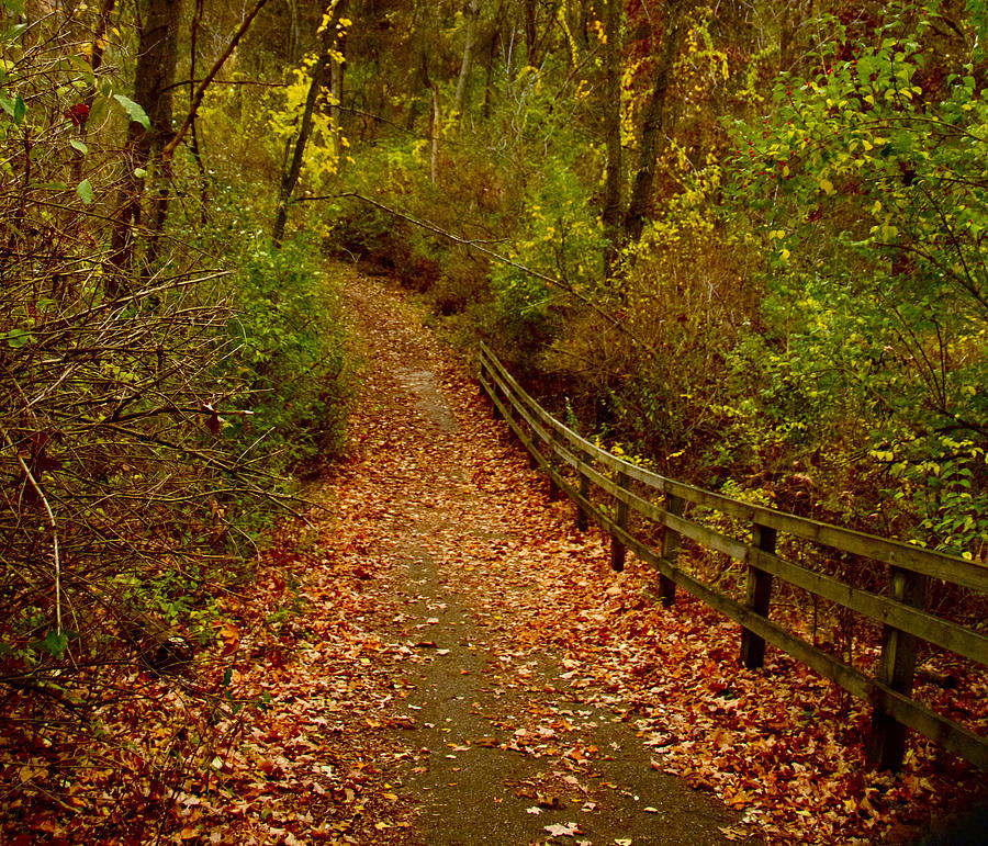 Fall Nature Walk is a photograph by Kimberly Davidson which was ...