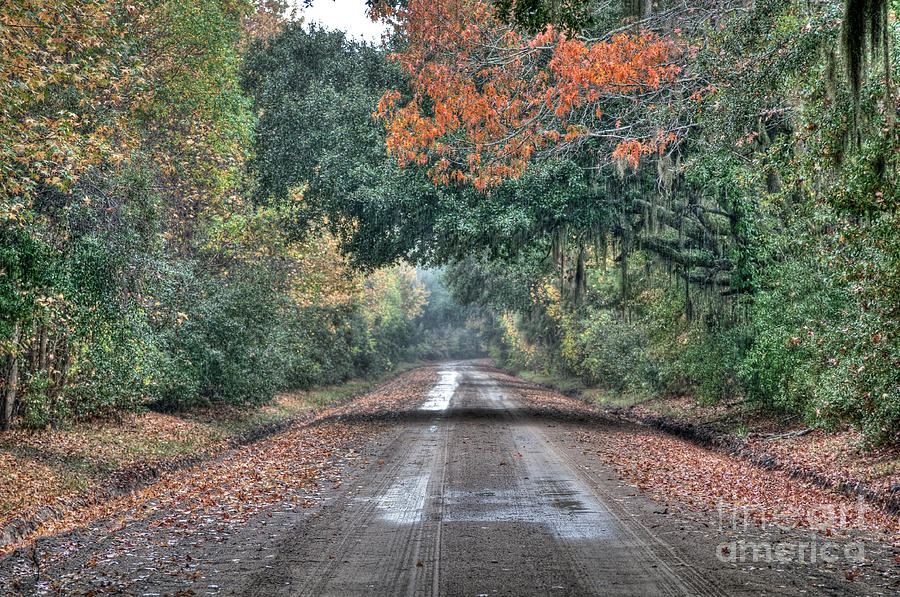Fall Photograph - Fall On Witsell Rd. by Scott Hansen