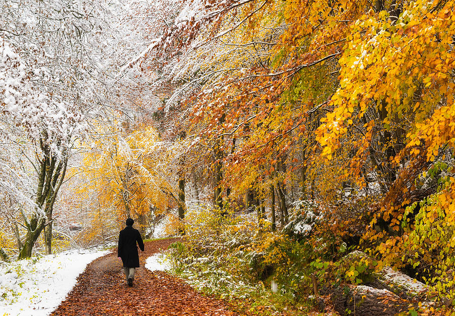 Fall Or Winter - Autumn Colors And Snow In The Forest Photograph
