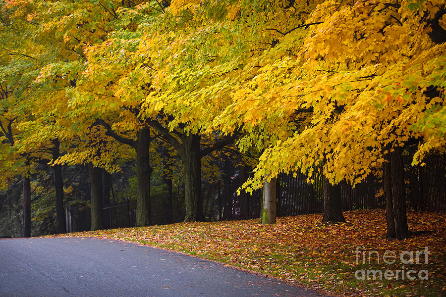 Fall Road And Trees Photograph