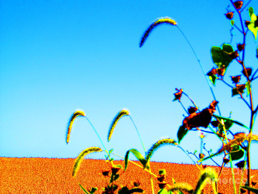Landscape Photograph - Fall Skies On Soybeans Farm by Tina M Wenger