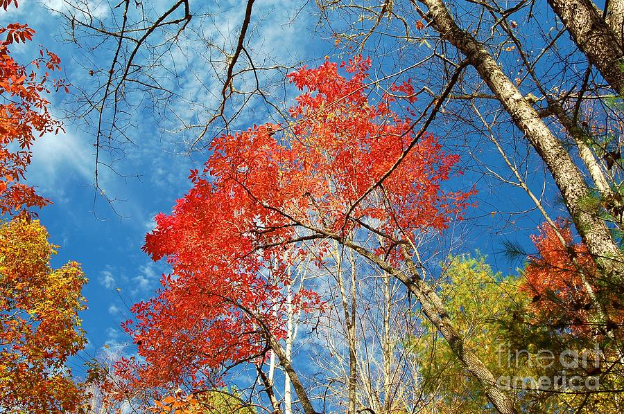 Fall Sky Photograph  - Fall Sky Fine Art Print