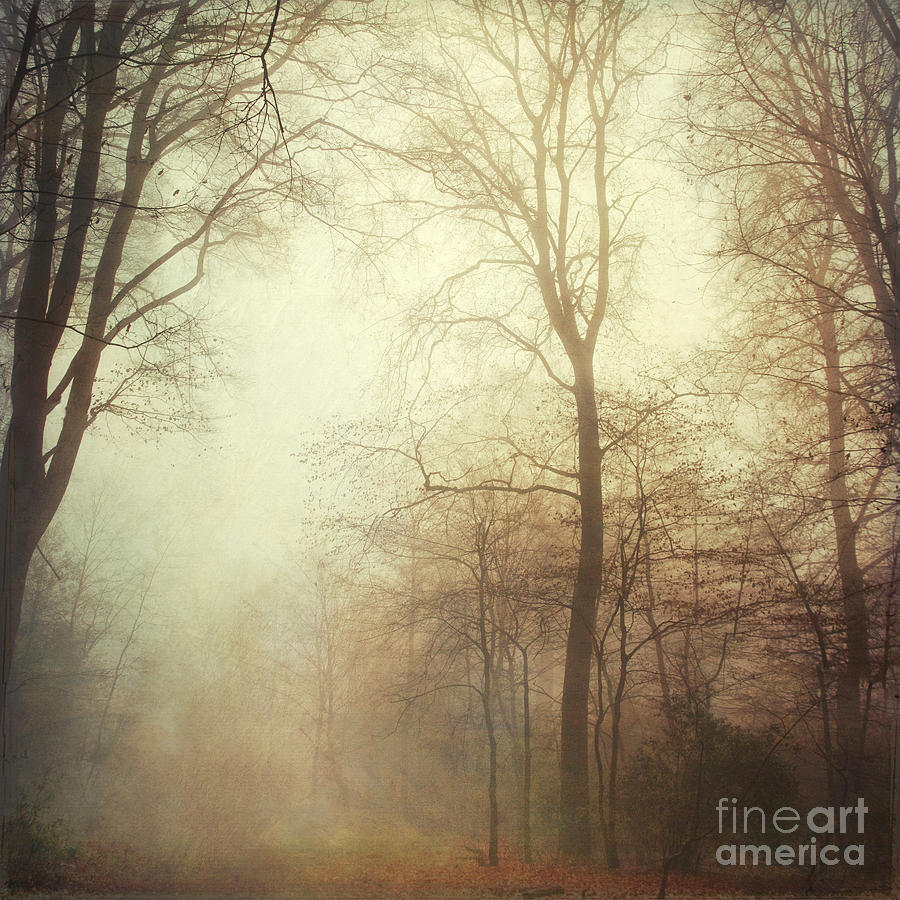 Fall Tales Photograph  - Fall Tales Fine Art Print