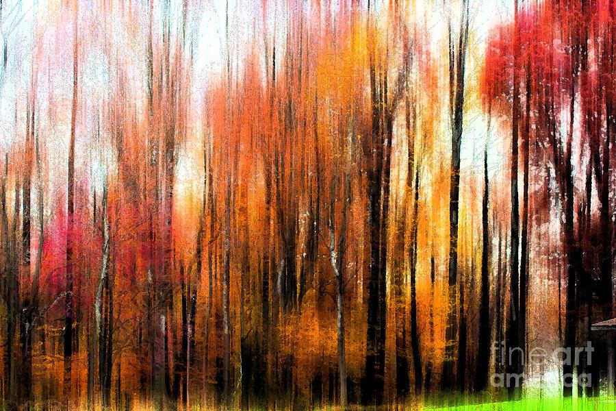 Fall Trees Of Bucks County Photograph