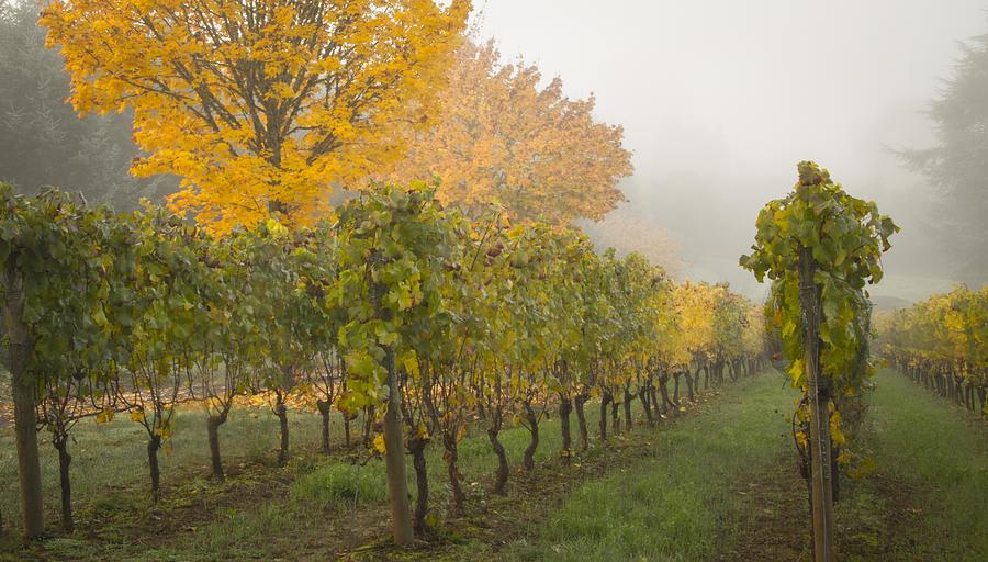 Jean Noren Photograph - Fall Vineyard Colors by Jean Noren