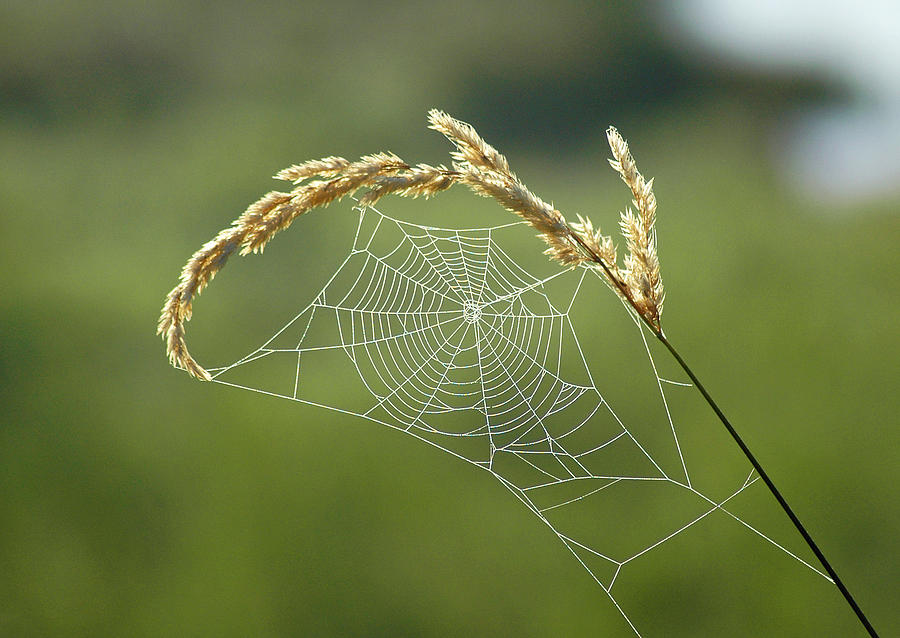 Fall Web Photograph  - Fall Web Fine Art Print