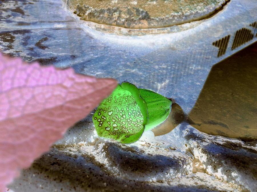 Fallen Foxglove Photograph