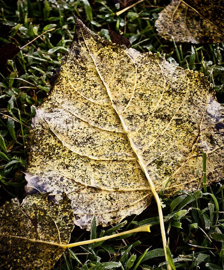 Fallen Leaf 3 Photograph