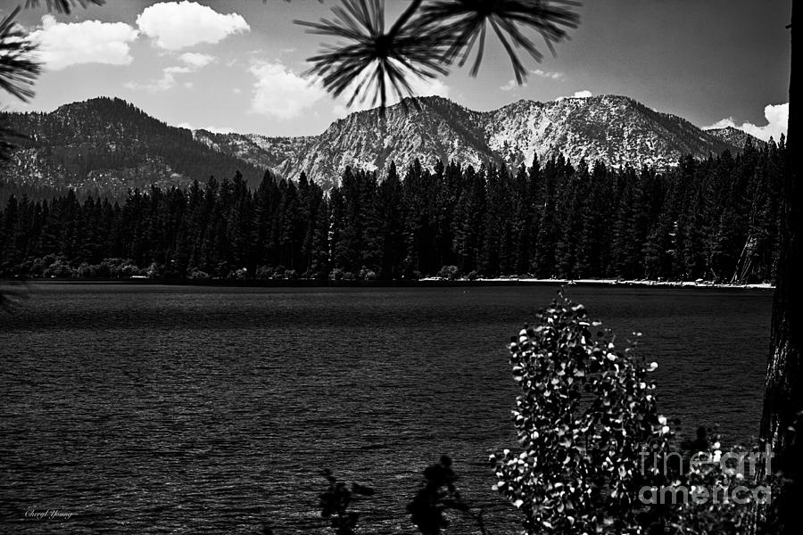 Fallen Leaf Lake Bw Photograph