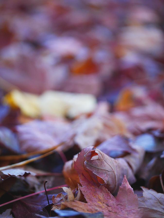 Fallen Leaves Road Photograph