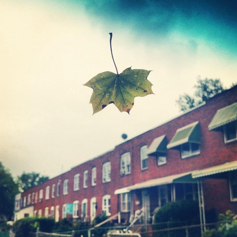 Leaf Photograph - Falling by Toni Martsoukos