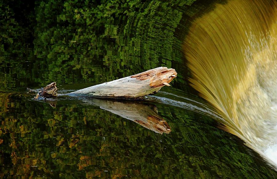 Falling Tree Reflections Photograph