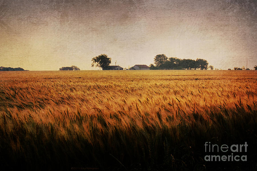 Family Farm Photograph  - Family Farm Fine Art Print