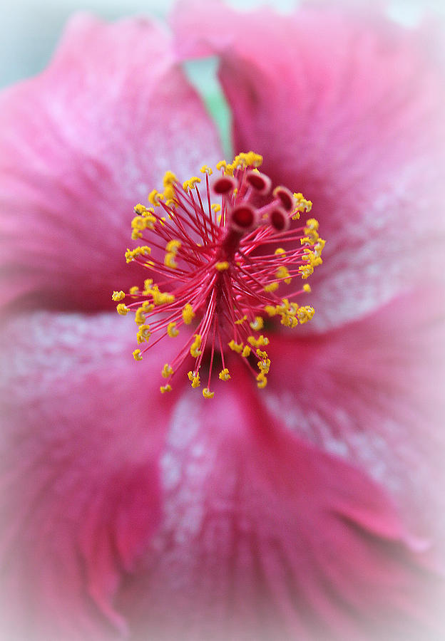 Fancy Flower Photograph  - Fancy Flower Fine Art Print