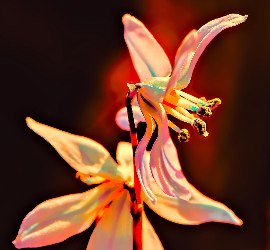 Fantasia Photograph - Fantasia by Leif Sohlman