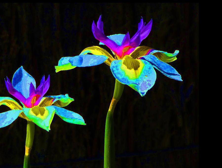 Iris Photograph - Fantasy Irises 2 by Margaret Saheed