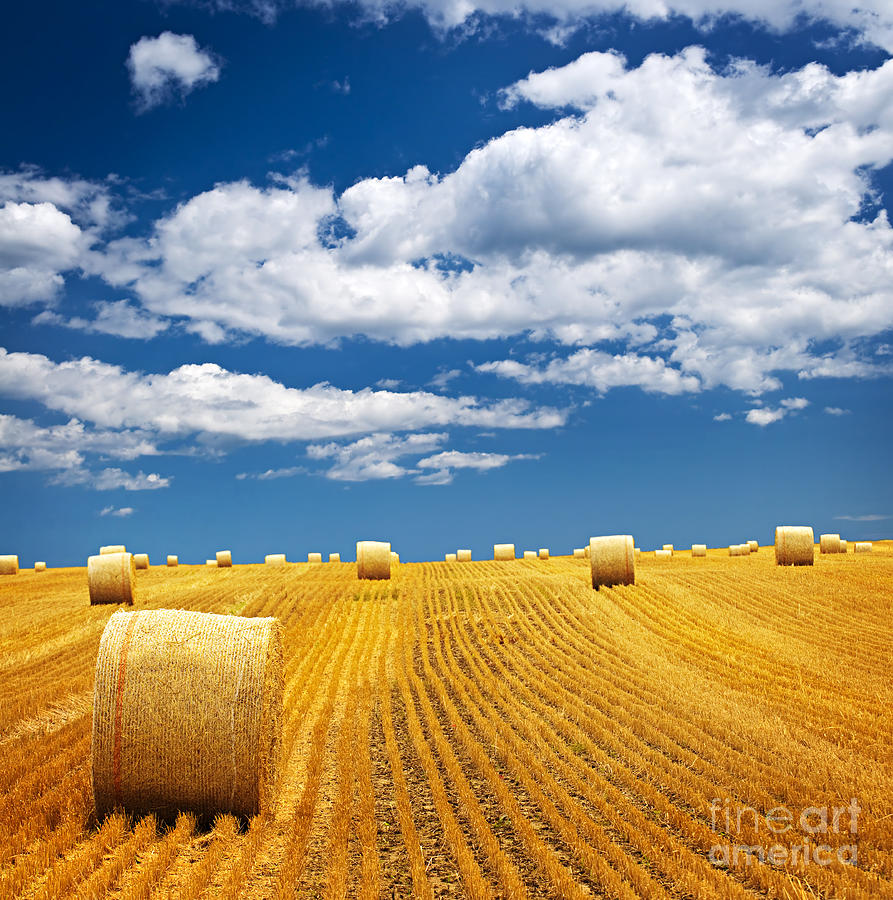 Farm Field With Hay Bales Photograph