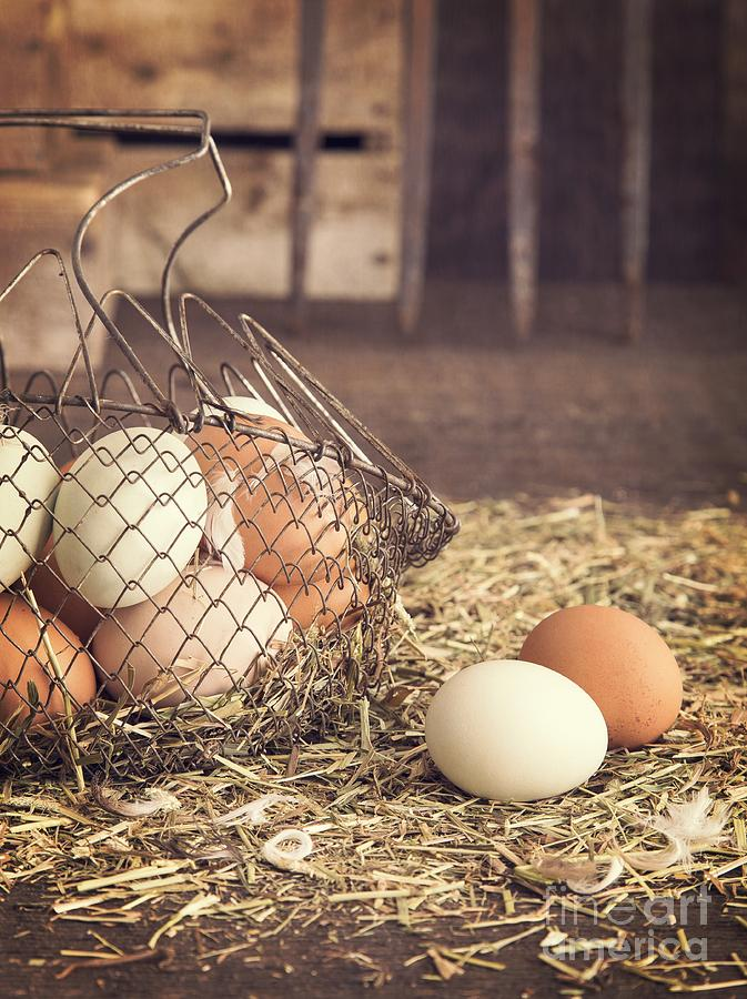 Agricultural Photograph - Farm Fresh Eggs by Edward Fielding