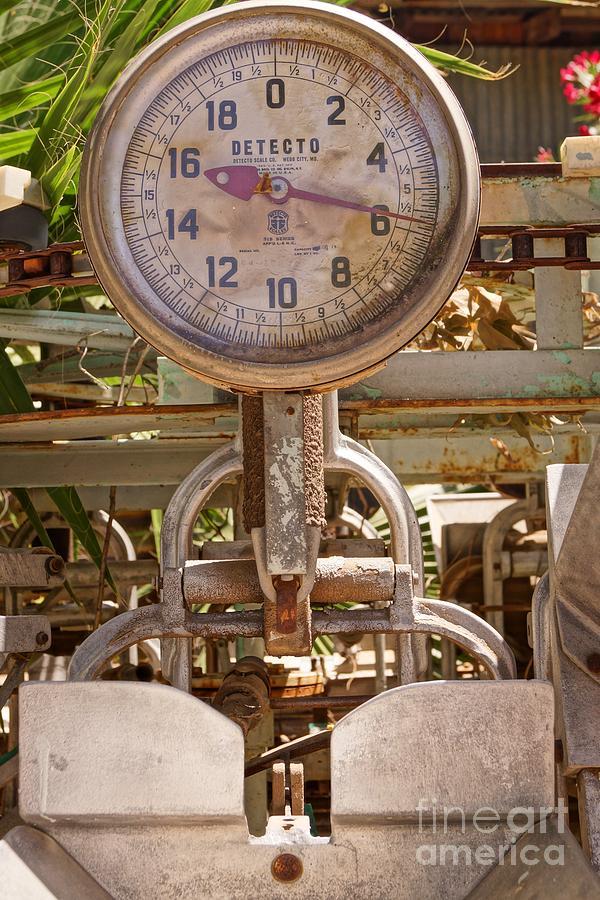 Farm Photograph - Farm Scale by Kerri Mortenson