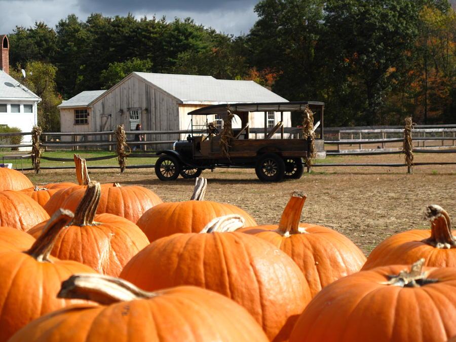 Pumpkin Photograph - Farm Stand Pumpkins by Barbara McDevitt