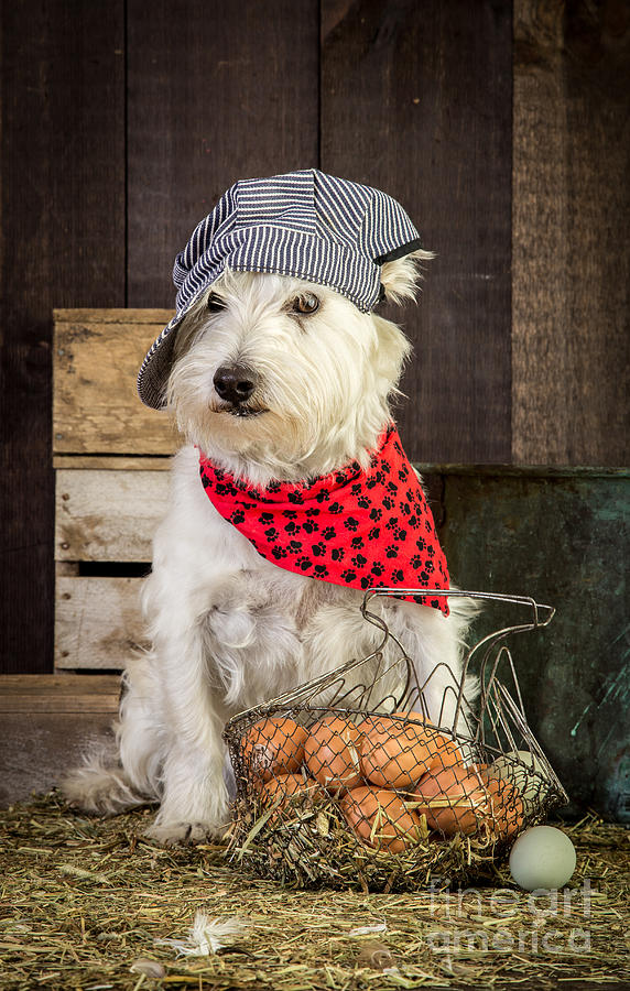 Farmer Dog Photograph  - Farmer Dog Fine Art Print