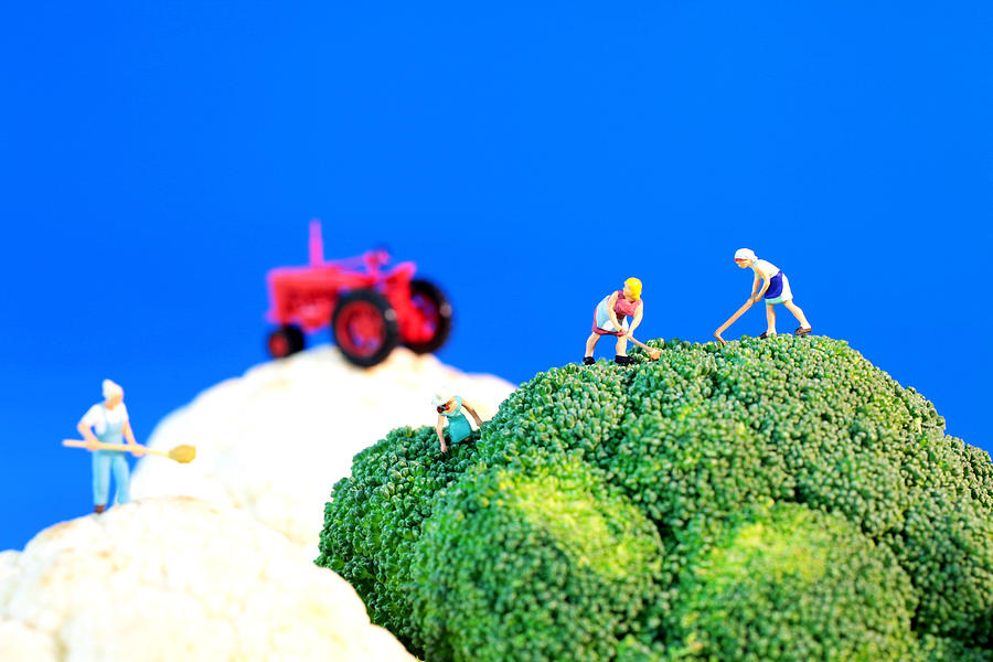 Farming On Broccoli And Cauliflower II Photograph