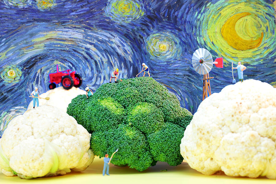 Farming On Broccoli And Cauliflower Under Starry Night Photograph