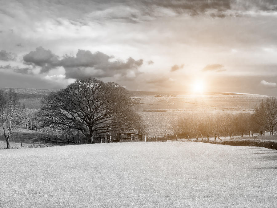Farmland In Sunlight Photograph  - Farmland In Sunlight Fine Art Print