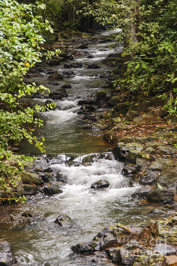 Fast Flowing Stream Photograph by Bob Phillips