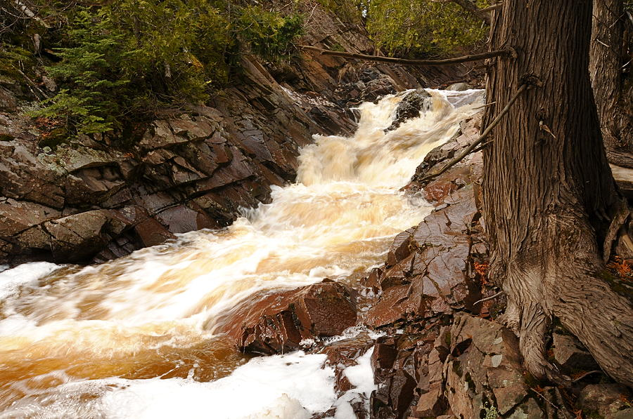 Spring Waterfalls Photograph - Fast Water And Cedars by Sandra Updyke