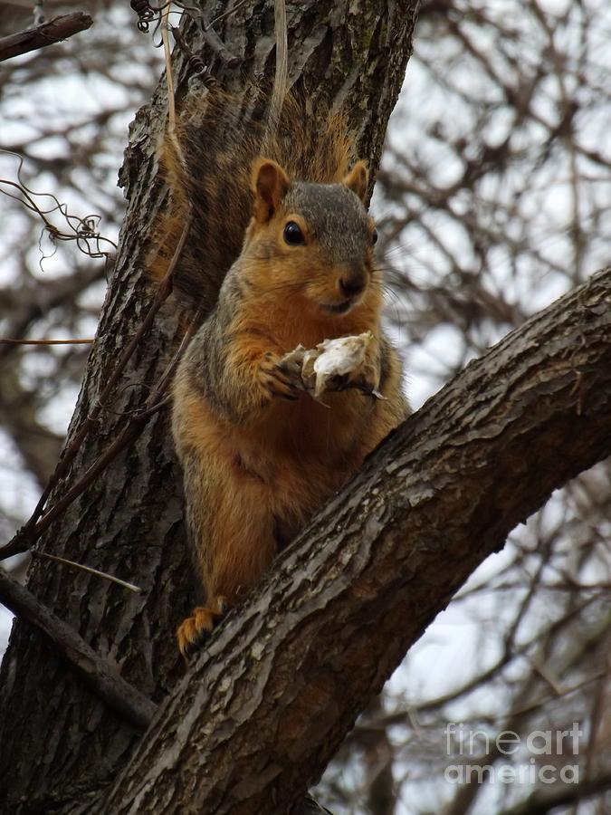 Feasting On Fish Fox Squirrel Photograph