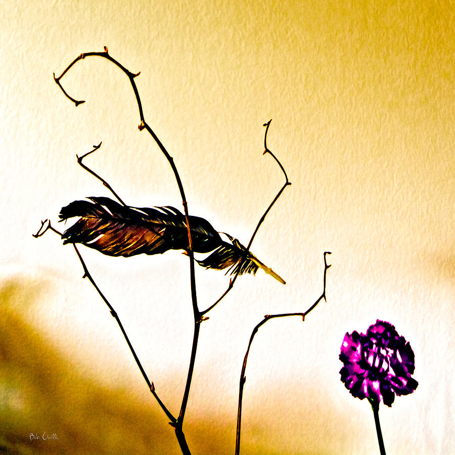 Feather And Carnation Photograph  - Feather And Carnation Fine Art Print