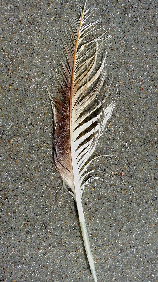 Feather On The Beach Digital Art