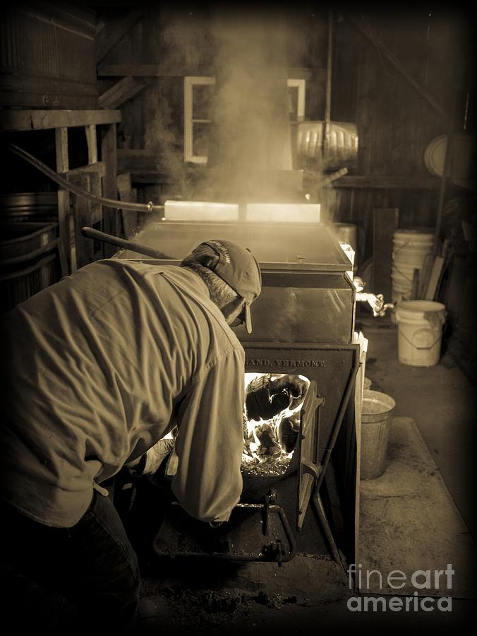 Maple Photograph - Feeding The Beast by Edward Fielding