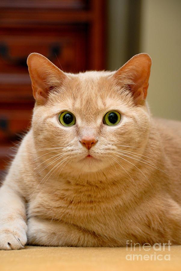 Feline Portrait Photograph