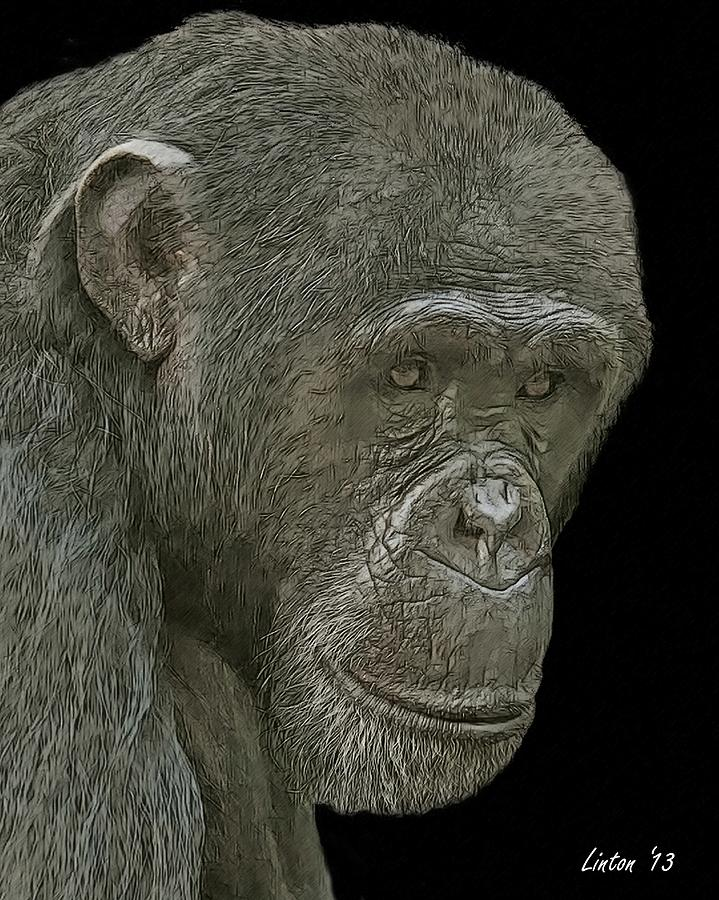 Chimpanzee Digital Art - Female Reflections by Larry Linton