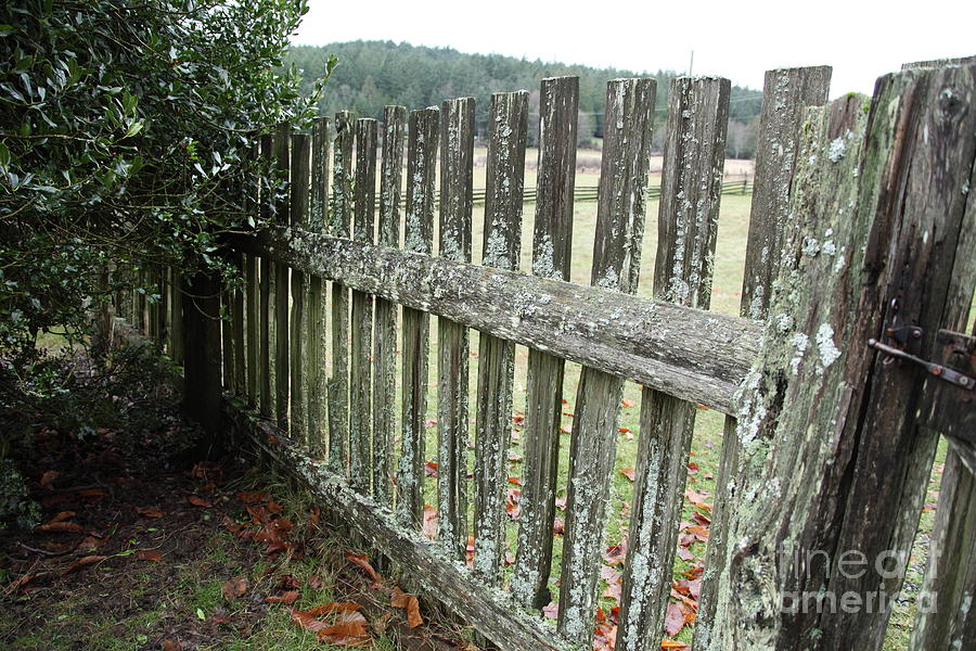 Fence At The Farm Photograph