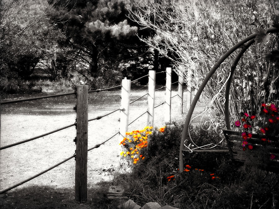 Fence Near The Garden Photograph  - Fence Near The Garden Fine Art Print