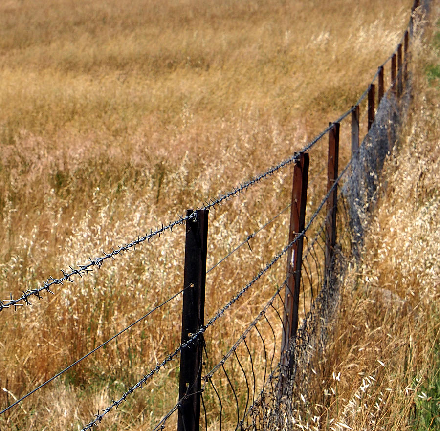 Fenced Off Photograph  - Fenced Off Fine Art Print