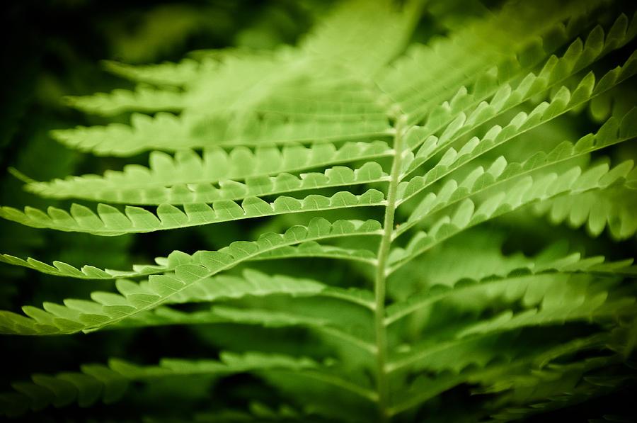 Green Photograph - Fern by Gabriel Lopez