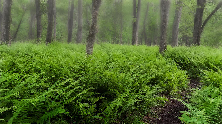 Fern Of The Fog Photograph  - Fern Of The Fog Fine Art Print