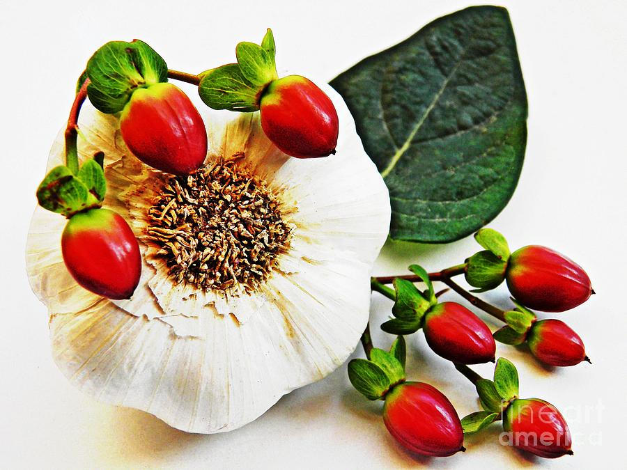 Festive Garlic Photograph  - Festive Garlic Fine Art Print